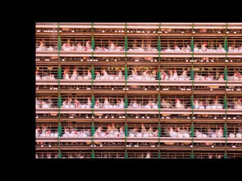 Food Security: The Challenge of Feeding 9 Billion People