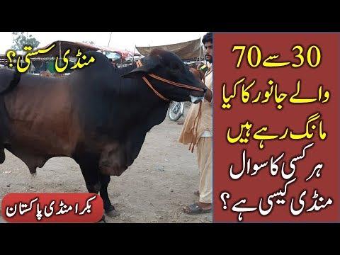 30 say 70 walay Janwar - Bakra Eid 2018 - Bakraeid In Pakistan - Bakra Mandi