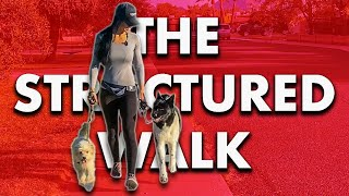The Structured Walk - How To Stop Pulling(Lunging, Barking, NOW!)