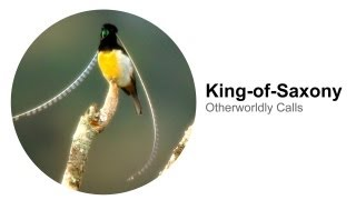 King-of-Saxony bird sounds like something from another planet