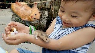 Trò Chơi Bé Ken Làm Nhà ❤ ChiChi ToysReview TV ❤ Đồ Chơi Trẻ Em Baby Doli Bài Hát Vần Thơ