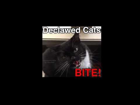 Declawed Cats BITE - True Stories