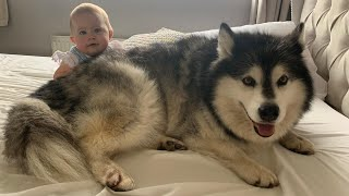 Spend A Day With All Of Us! Day In The Life With Malamutes And A Child!