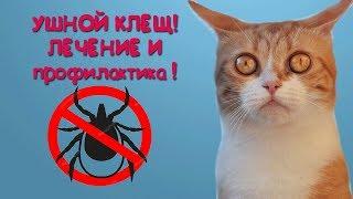 Ушной клещ у кошек! Лечение и профилактика! Проверьте своего питомца!