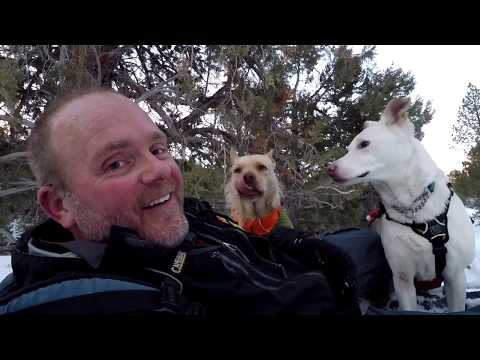 Dog Snowshoe Sled Joring! A Review of the Ruffwear Omnijore and Highlands Dog Sleeping Bag and Pad.