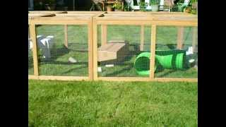 New Rabbit Run