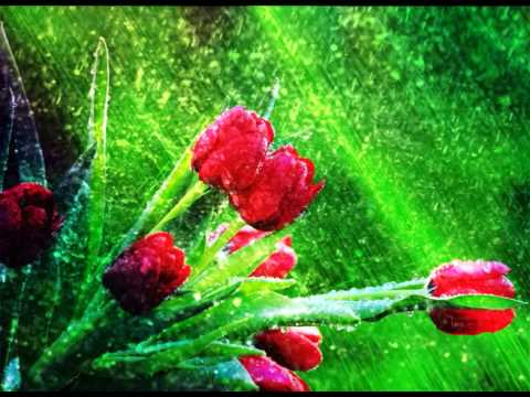 Free Wedding background, Free HD motion animation, Download Video background -  - FLOWER 10 thumbnail