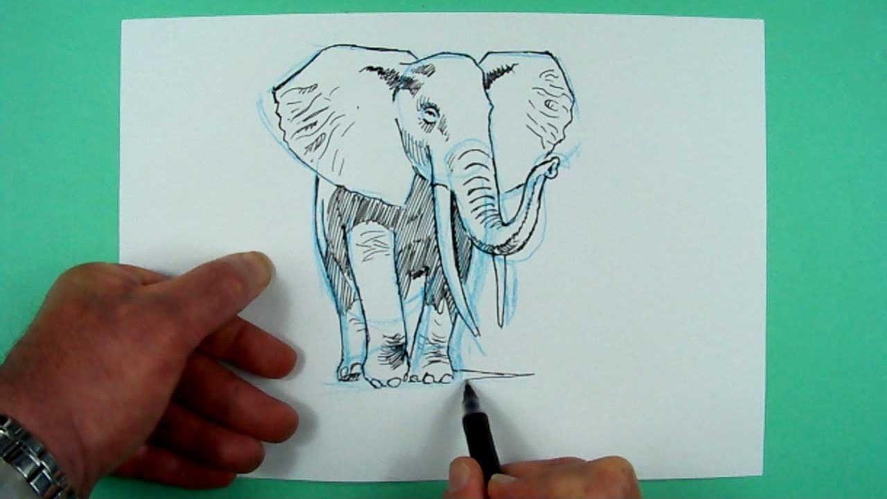 Wie Zeichnet Man Einen Elefanten Zeichnen Fur Kinder Youtube