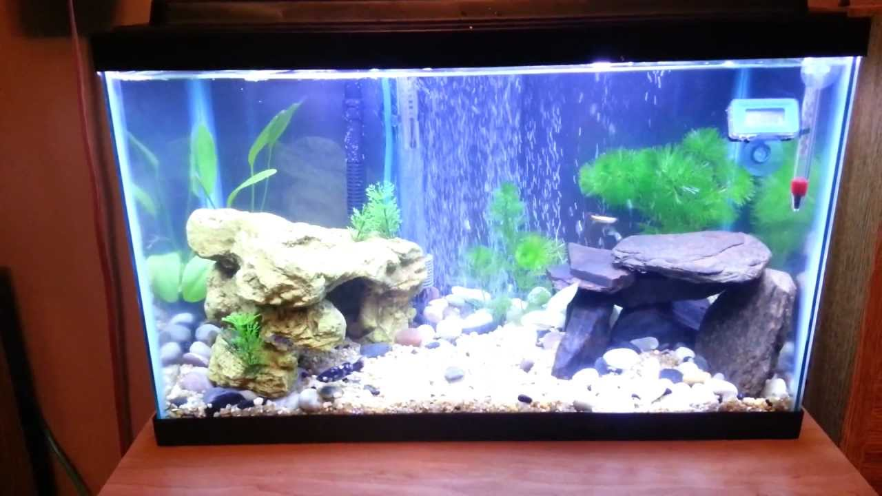 Best aquarium ever 10 gallon planted tank tips n for Fish for a 10 gallon tank