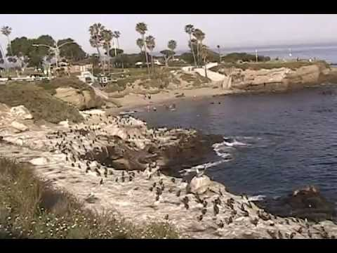 La Jolla Cove Tour