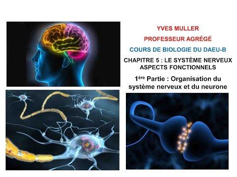 Chapitre 5 - 1ère Partie : Organisation du système nerveux et du neurone - Cours de Biologie