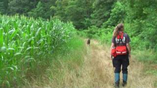 SAR Dog works along a cornfield - with Notes