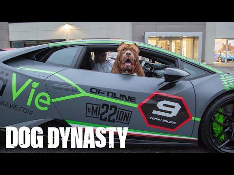 Hulk Goes Lamborghini Shopping | DOG DYNASTY
