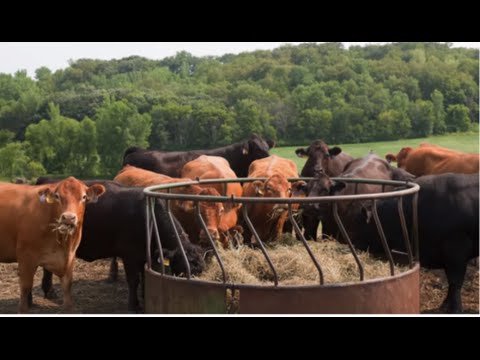 Life Cycle Assessment and Greenhouse Gas Emissions from Animal Agriculture