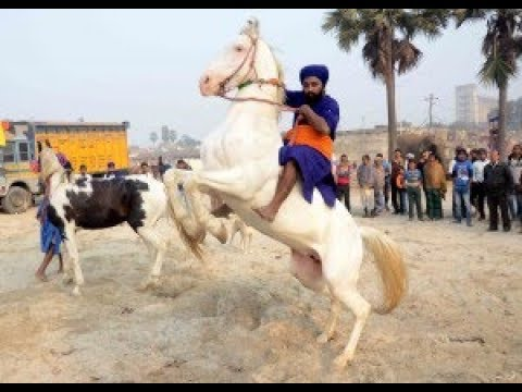 | Takhat Sri Harimandir Ji | Patna sahib amazing ARBI  horses |Road show|