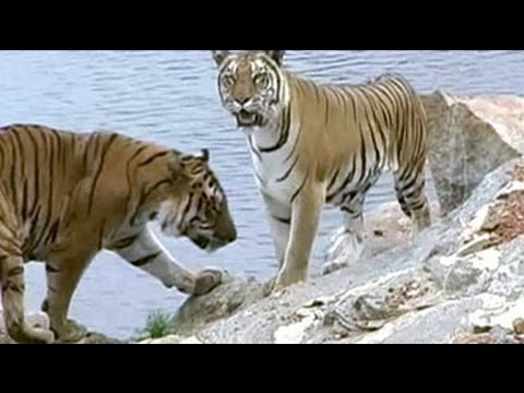 Bandipur tiger reserve: The beauty & the beast