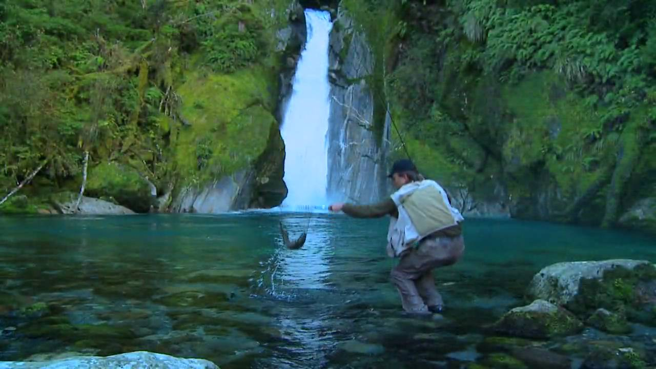 Fly fishing new zealand dvd video movie trailer for the for New zealand fly fishing