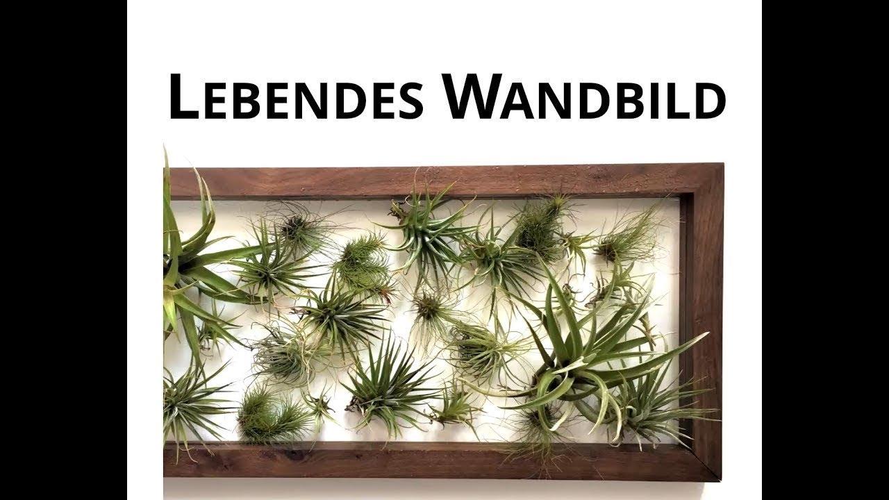 Tillandsien befestigen lebende wandbilder mit - Tillandsien deko ...