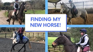 FINDING MY NEW HORSE - vlog!