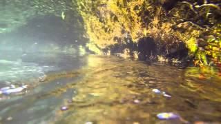 Baixar Underwater Symphony
