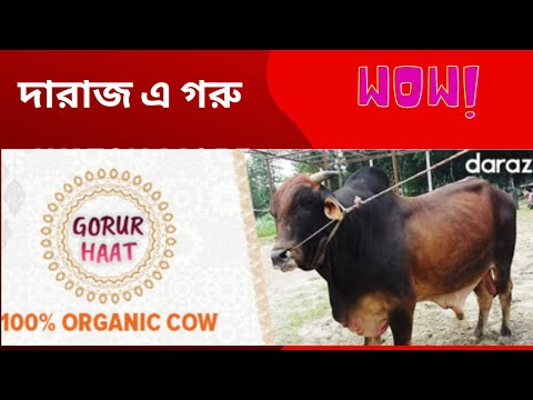 Gorur Haat 2019   August Cow Collection   Sunamgonj Gorur Haat Sylhet from YouTube · Duration:  1 minutes 14 seconds