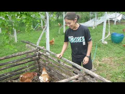 Permaculture: Making Compost Bin Inside Chicken Coop To Reduce Feeds Expense At Tantai Farm