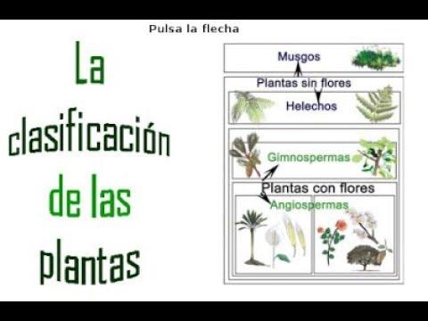 Reino plantae 2 parte clasificaci n de las plantas youtube for Clasificacion de los planos arquitectonicos
