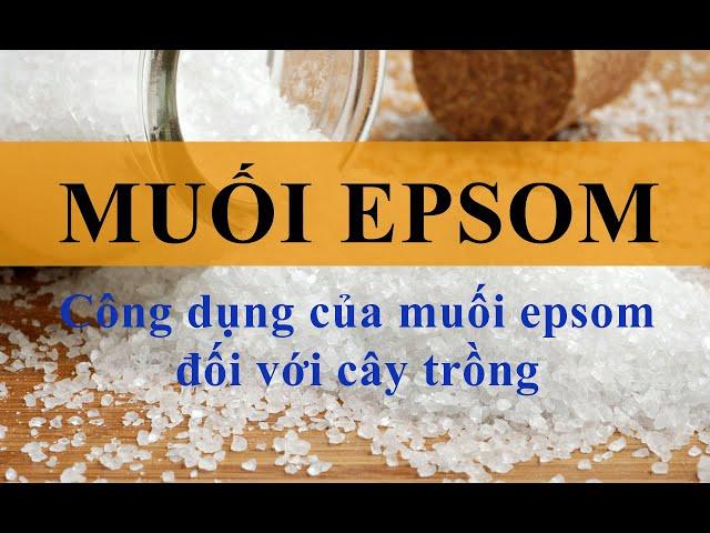 Muối Epsom - Có phải thần dược cho cây trồng xanh lá, hoa đẹp, trái to (Vườn Sài Gòn 0909 1234 09)