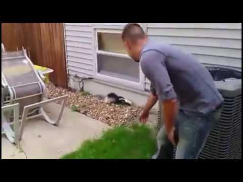 Saving a neighborhood skunk's life, lifesaver!!