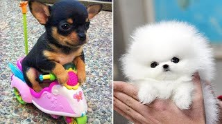 Baby Dogs  Cute and Funny Dog Videos Compilation #4   Funny Puppy Videos 2021