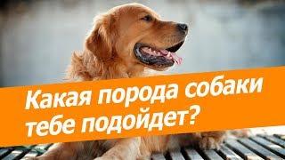 Тест: Какая порода собаки тебе подойдет?