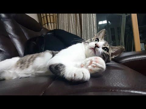 고양이 입양 전과 후 태도 변화