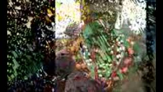 Salif Keita & Cesaria Evora    Yamore