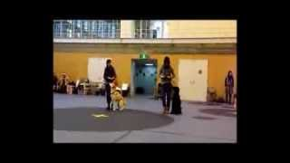 This is Dog Dance Flash Mob at Dogslife's Christmas Party 2013. Ori...