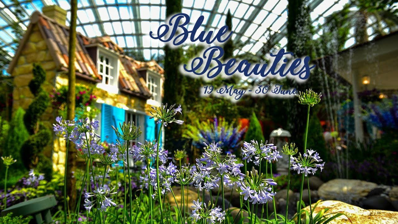 blue beauties at gardens by the bay flower dome fri 19 may 2017 fri 30 jun 2017