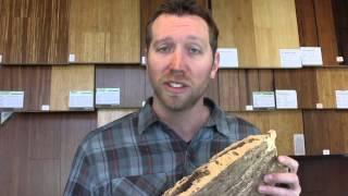 Eco Cork Flooring Series Pt.1: Sustainability of Cork Flooring - Eco Cork Nieve
