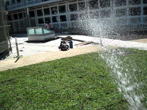 Post Plant Watering Of Etera Sedum Tiles Avi Youtube