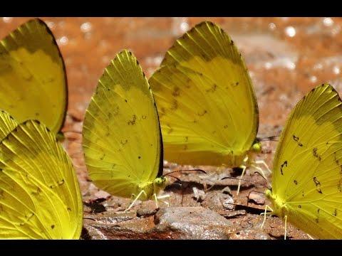 Mã Đà mùa bướm bay
