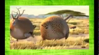 Что будет если дикие животные будут есть фаст фут