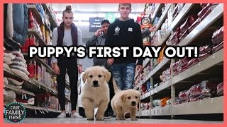 puppy-s-first-day-out-shopping-trip