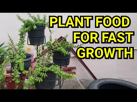 Free Plant Food For Fast Growth || Miracle Fertilizer For Plants || Fun Gardening