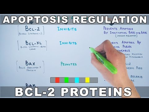 Apoptosis Regulation by Genes | Bcl-2 Family