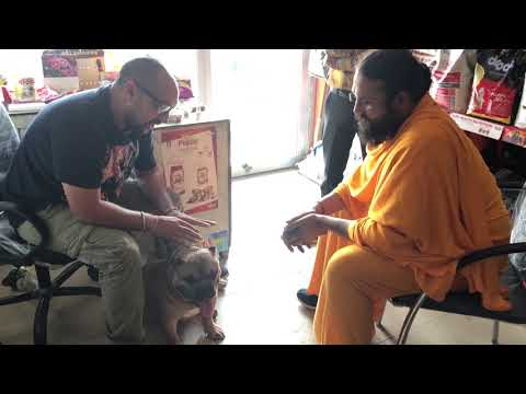A talk with Humble Animal lover Priest - Bhola shola Films