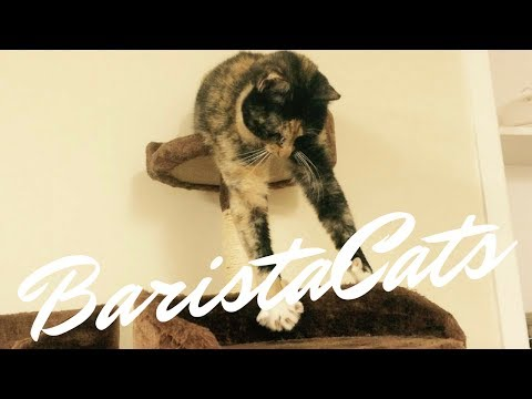 Auckland Cat Cafe | BaristaCats