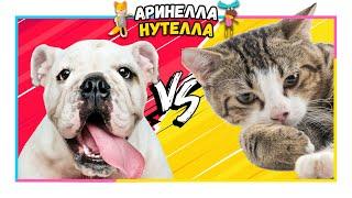 влог: собаки, кошки, попугаи, кролики и акробаты КУДА Я ПОПАЛА???