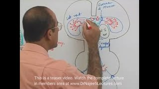Cerebrospinal Fluid - Neuroanatomy