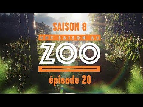 Une Saison au Zoo S8 - Ep 20