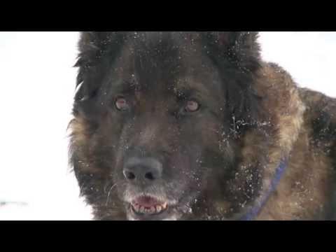 Der Wolf Doku