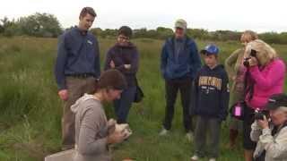 Barn Owl Banding At Terra Nova Rural Park