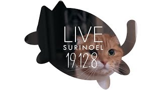 생방송 수리노을 고양이가족 19.12.8 LIVE 【SURI&NOEL】 thumbnail